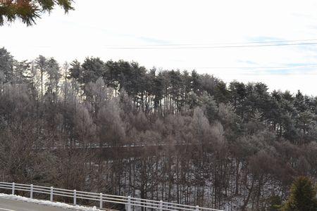 菱野温泉の木々が白くなってとても綺麗です!